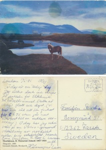 Thorlaksson_häst
